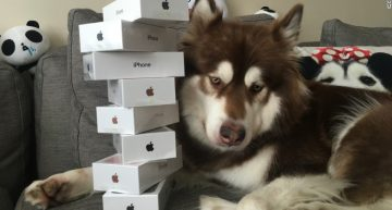 This Billionaire Son In China Bought 8 iPhone 7 Handsets For His Dog