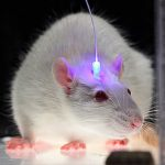 Here's How Scientists Are Using Optogenetics (And An Android App) To Cure Diabetes